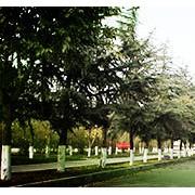 四川大学附设华西卫生学校十陵校区